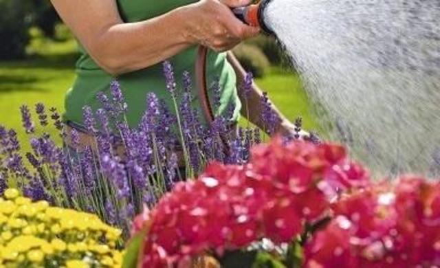 Expertentipps_Gartenpflanzen_384x234